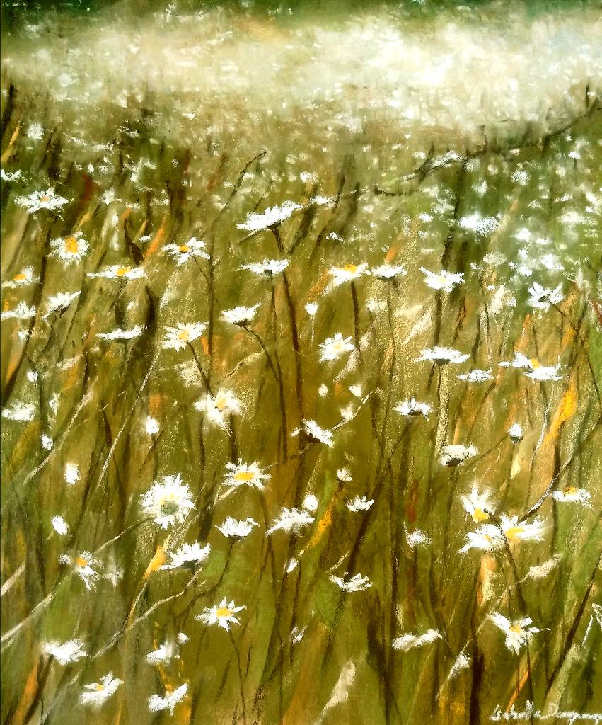 Champs de marguerites - Peinture au pastel sec par l'artiste peintre Isabelle Douzamy - 53,5x63,5 cm (encadré)