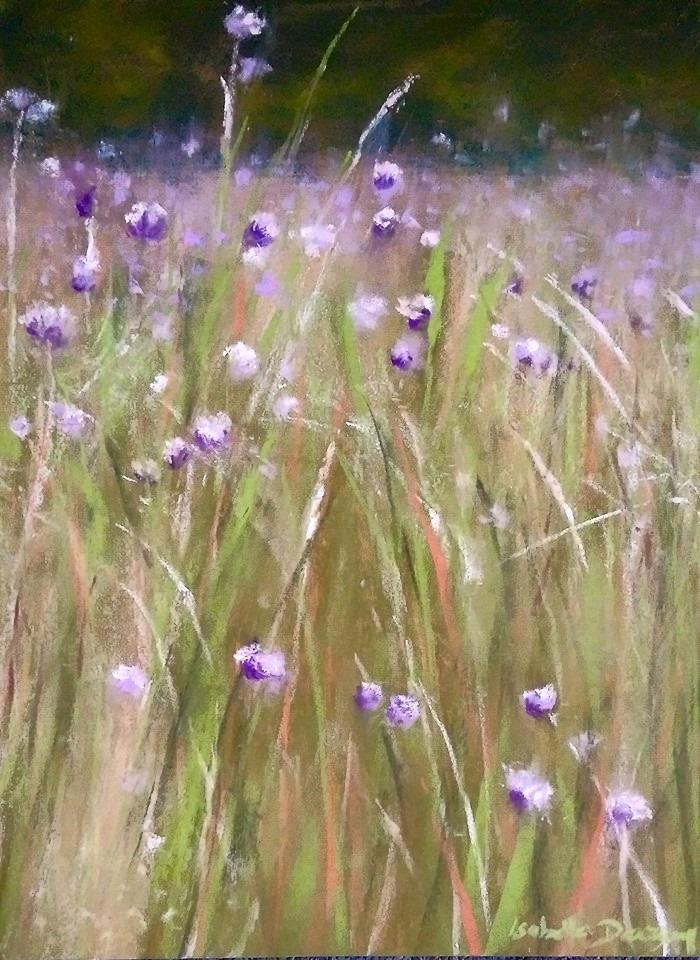 Champs de phacélies - Peinture au pastel sec par l'artiste peintre Isabelle Douzamy - 40x50 cm (encadré)