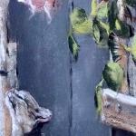 Le Chat - Peinture au pastel sec par l'artiste peintre Isabelle Douzamy - 30x57cm encadré